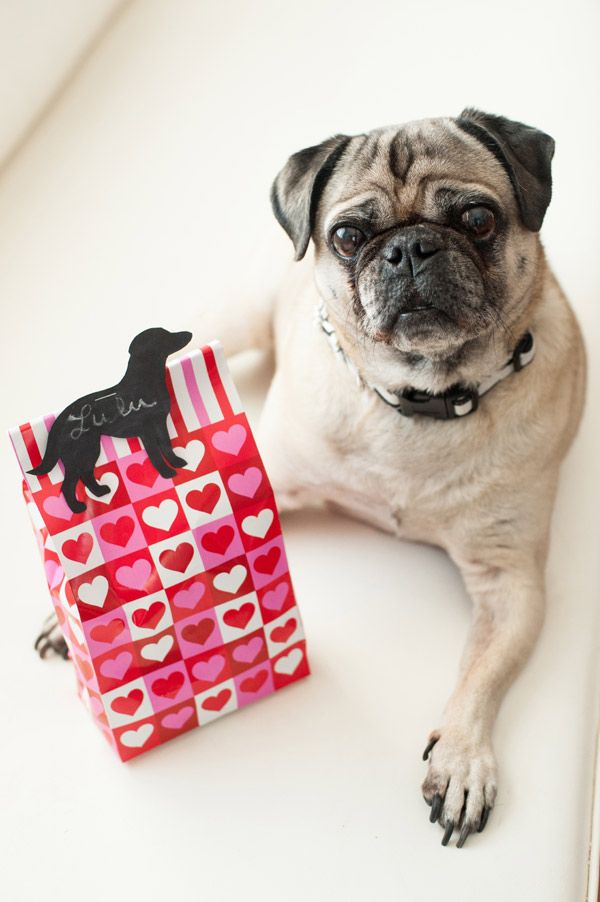 DIY Mashup Valentines Day treat for dogs | Daily Dog Tag | photo by © Alice G Patterson Photography