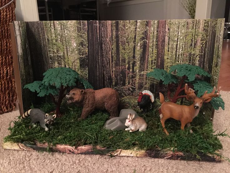 Forest Habitat Shoe Box Project School Projects