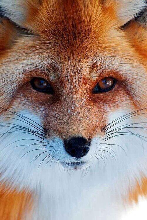 *-* perfección hecha animal