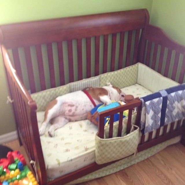 Ethan Krause We Can Turn Charlies Crib Into A Dog Bed For