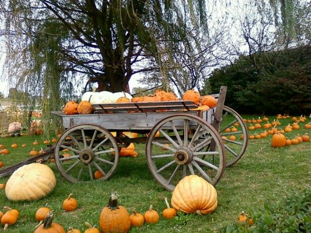Thanksgiving yard decorations - 38 Best Images About Wagons On Pinterest The Old