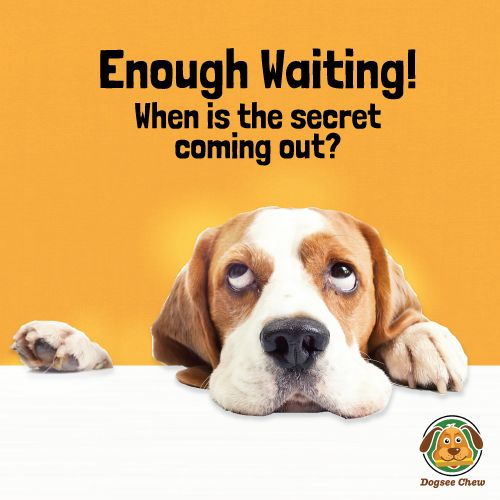A little more wait and the secret that turns your dog into a #superdog will be out. Until then, keep calm & WOOF WOOF!