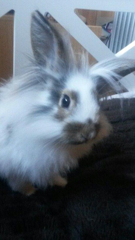 Mumrikk. Den nye kaninen min.