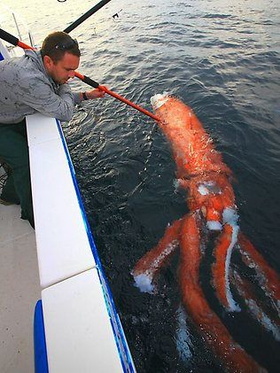 Giant squid caught | You wouldn't miss this giant sea creature for squids | News.com.au