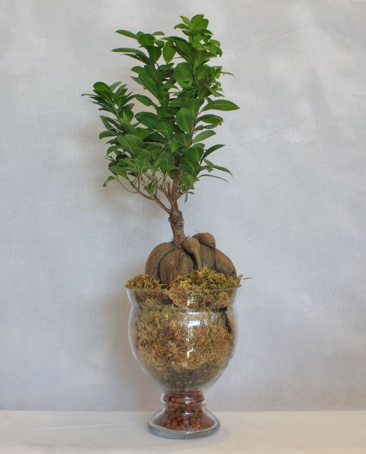Bonsai σε γυάλινο βάζο