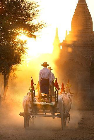 Bullock cart . Bagan, Myanmar