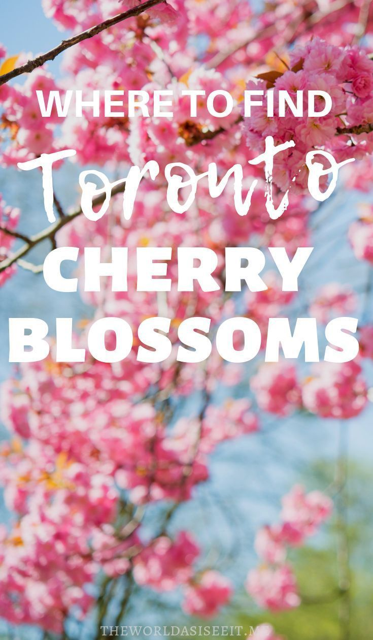 Where To Find Cherry Blossoms In Toronto The World As I See It Ontario Travel Toronto Travel Canadian Vacation