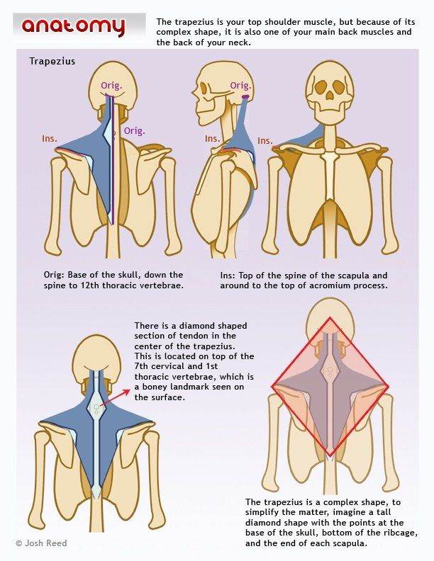 19 best Physiotherapy - head & neck images on Pinterest | Human ...