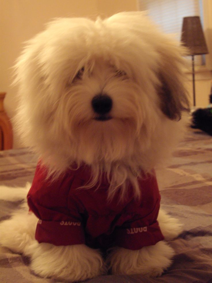 It S Raining Cats And Dogs Coton Kisses Amp Cuddles And