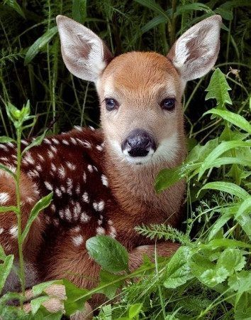 44 best bambi deer images on pinterest disney drawings