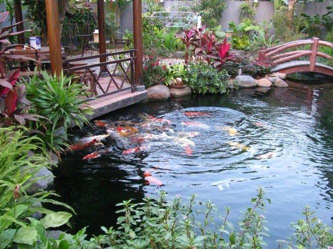 Hồ cá koi Nhật bản truyền thống