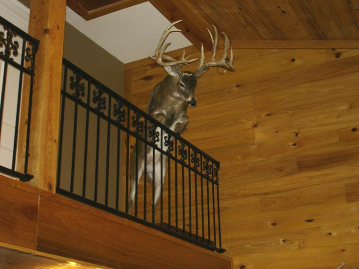 Deer Hunting Man Cave Ideas : This is such a great idea for full body mount amazing