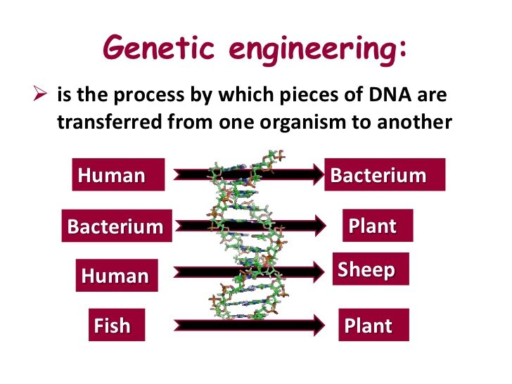 "thesis on genetic engineering Let's suppose you decide to build your thesis on the argument that genetic engineering is a virtue with associated benefits that surpass its evils so you will have a thesis statement: ""beneficial aspects of genetic engineering surpass the notorious evils associated with it, provided a vigilant scrutinization is administered by government."