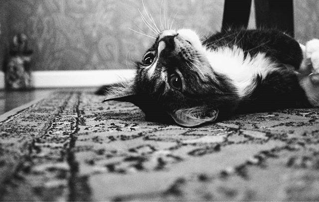 Mindjárt itt a hétvége, és ha kedvünk tartja, relaxálhatunk a szõnyegen fekve, megérdemelten, egy fárasztó hét után. 😊😸😍 #szőnyeg #cat #kitty #macska #hétvége #relax #drpadlo