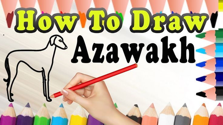 How To Draw A Dog Azawakh | Easy dog drawing Tutorial | Draw Easy For Kids
