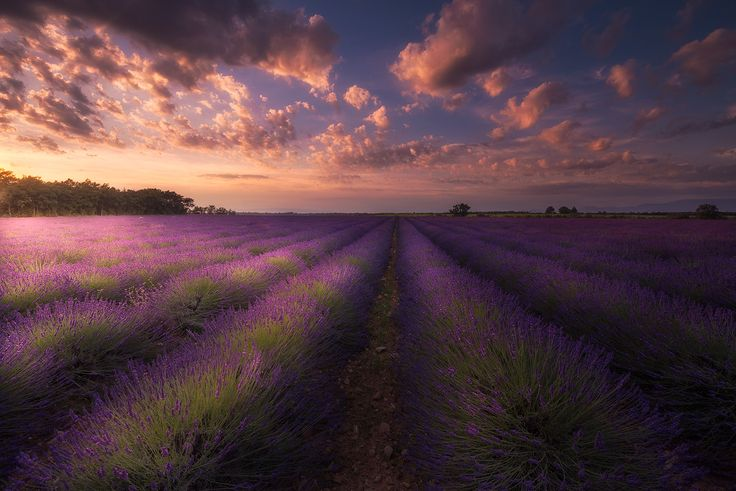 Dramatic sunset over a lavender field. Valensole, France. #Campi #Clouds #DramaticSunset #fineart #Fields #fineartphotography #Francia #France #Glow #landscape #Glowing #landscapephotography #lavender #Lavanda #LavenderFields #marcoromani #travel #Riez #Provenza #Purple #SunRays #marcoromaniphotography #outdoorphotography #Sunset #Provence #Valensole #Nikon #Feisol #Nikkor #NikonD800