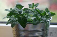 Táto voňavá rastlina dokáže so zdravím divy!