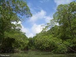Resultado de imagem para floresta tropical africana