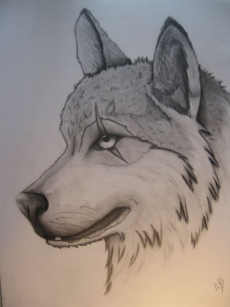 Best 25+ Cool wolf drawings ideas on Pinterest | Art in nature ...