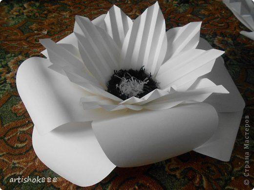 Мастер-класс Поделка изделие Выпускной Свадьба Бумагопластика Большие бумажные цветы Бумага фото 1