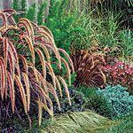 garden borders-plants covering garden wall