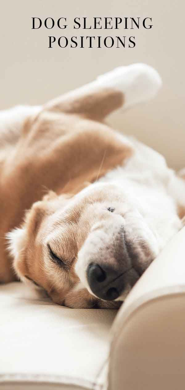 Dog Sleeping Positions Are There Hidden Meanings To Your Pup S