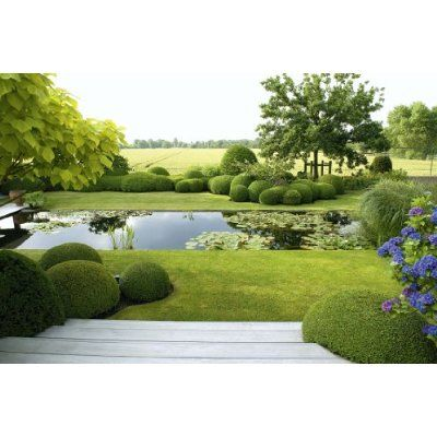 Boxwood bubbling up from the lawn, a rectangular lily pond, steps and field.