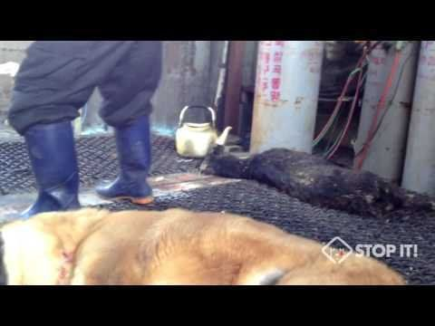 We request that Standard & Poor please review and reduce South Korea's current credit rating. South Korea's illegal dog meat industry is being exposed worldwide for its brutal and barbaric trade, damaging both their economy and social image.    South Korea has the world's 14th largest economy...