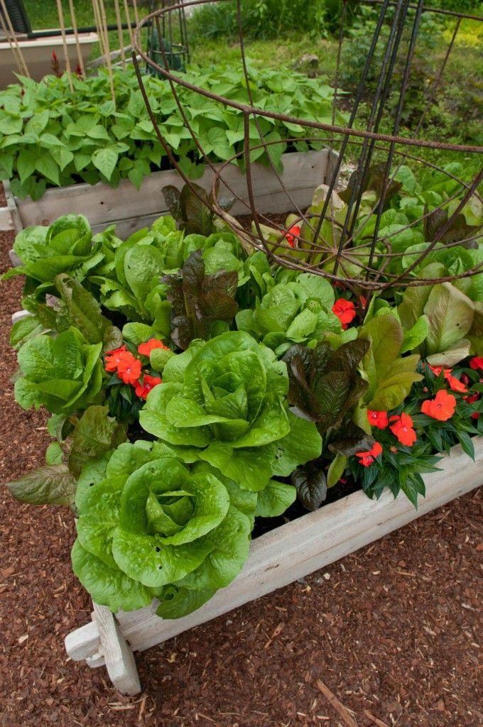 Home Garden Design Ideas: 392 Best CONTAINER Gardens Images On Pinterest