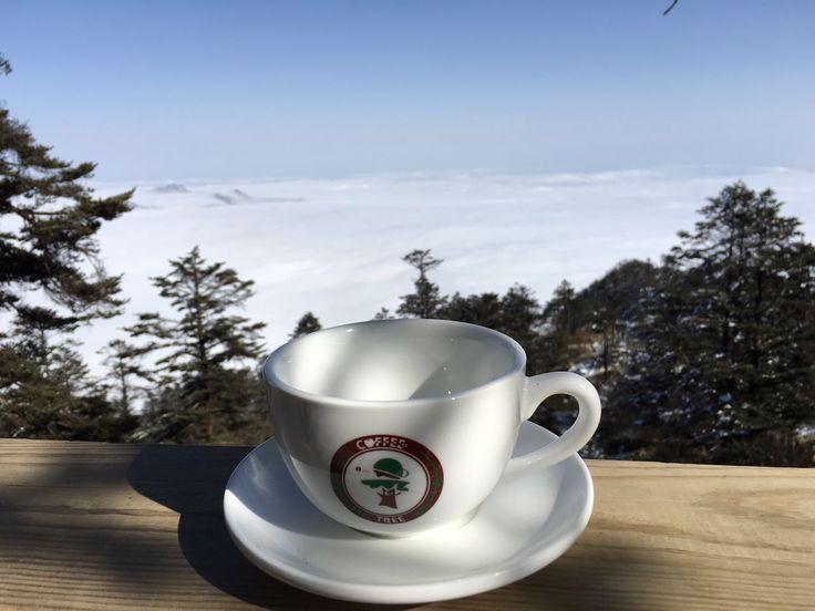 Coffee Tree Organic Coffee