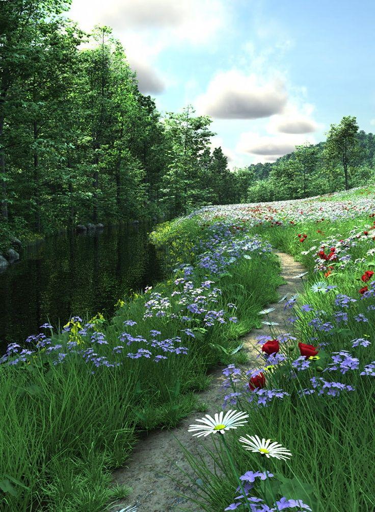 Beautiful country walk through wildflowers