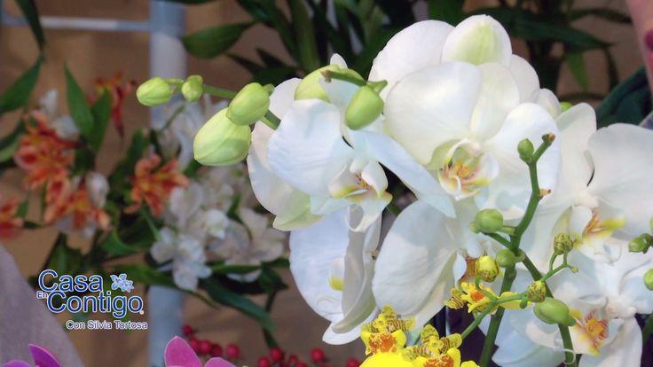 Plantas de interior cuidados y consejos para anturio for Cuidados orquideas interior