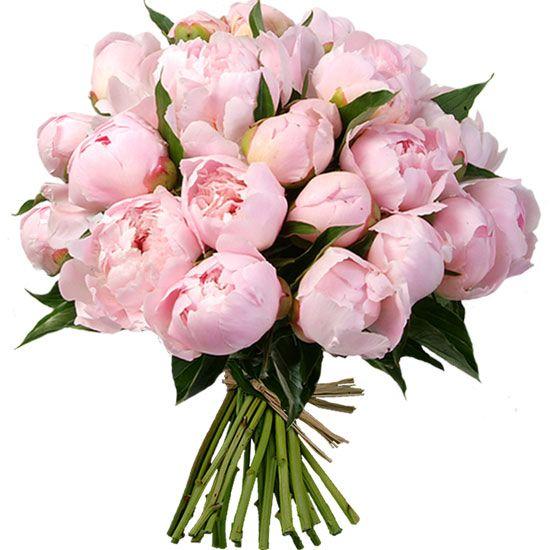 Pivoines d'exception au doux parfum produites en France spécialement pour Aquarelle.com