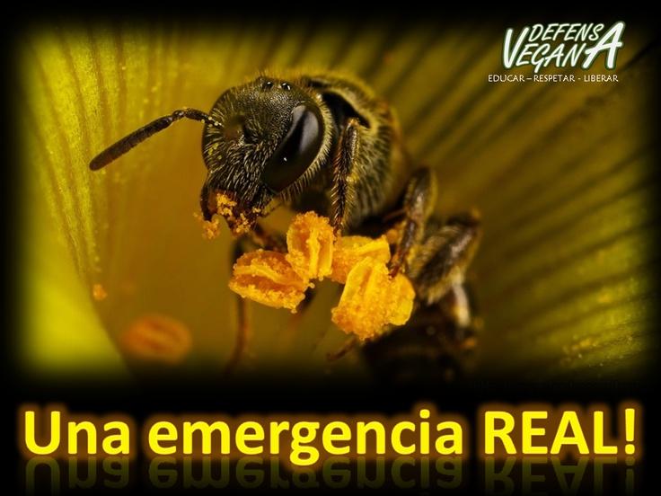 Durante los últimos años, el mundo ha sido testigo de un alarmante declive de las abejas. Su número se redujo en un 57% desde 1985 a 1997 y continúan en declive.  A su vez, de acuerdo con el Fondo de Conservación de Abejorros del Reino Unido, en este país se extinguieron dos especies de abejas durante los últimos 70 años, seis especies se encuentran en peligro de extinción y algunas podrían desaparecer muy pronto si no se actúa con urgencia.  La tendencia es clara: en distintas partes del…