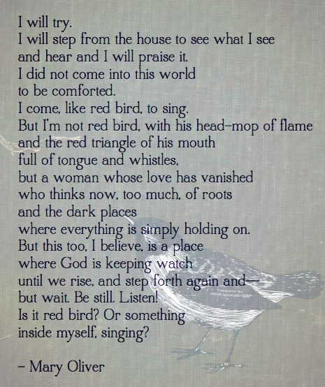 Mary Oliver Love Quotes: Best 25+ Mary Oliver Ideas On Pinterest