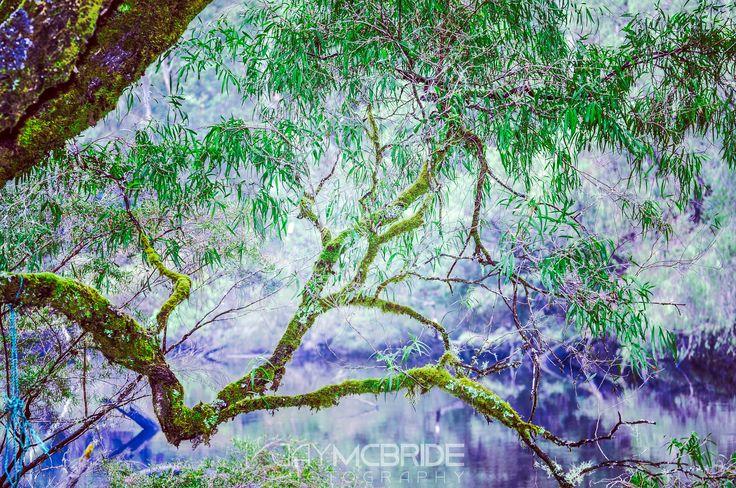 Smoky river by http://jaymcbride.photos  #water #australia #branch #branches #camping #environment #environmental #green #greenlife #growth #holiday #lake #nature #pemberton #river #smoke #tree #trees #vegetation