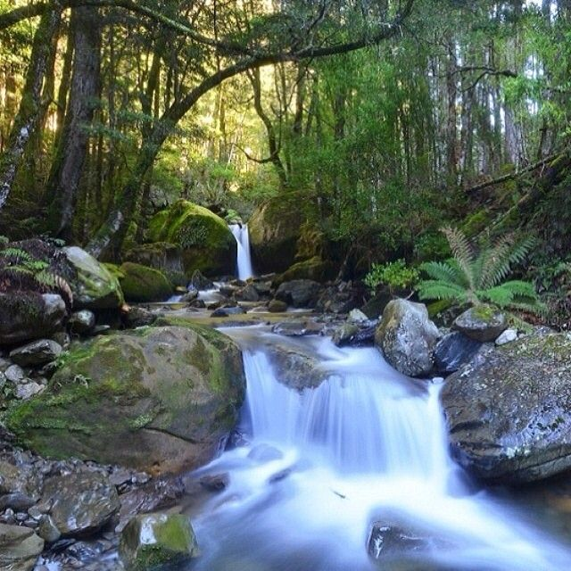 The serene Chasm Falls in northern Tasmania. Chasm Falls is within the Meander Forest Reserve about 20 minutes from Mole Creek, at the end of a decent day walk. #discovertasmania #tasmania #chasmfalls #molecreek #meanderforest Image Credit: Brad Chilby Photography