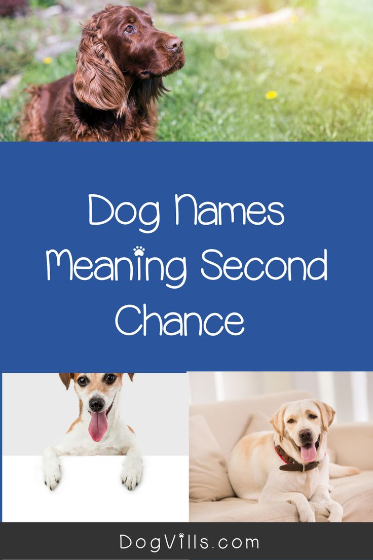 84 Beautiful Dog Names Meaning Second Chance - DogVills in ...