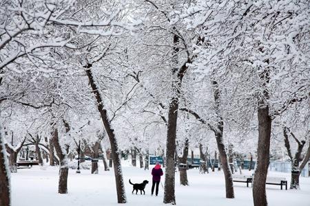 Regina, SK - Wascana Park in winter