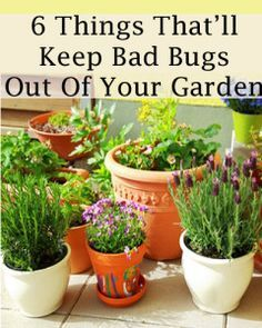 A selection of plants that will keep those nasty bugs at bay.