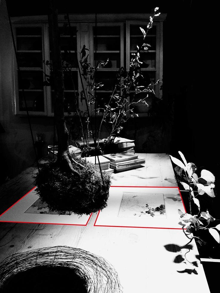 Kokedama on the table - florist donaflor