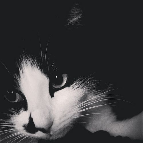 Visitantes fugaces. by sergioski1982 #Cats #Gatos #FotoGatetes
