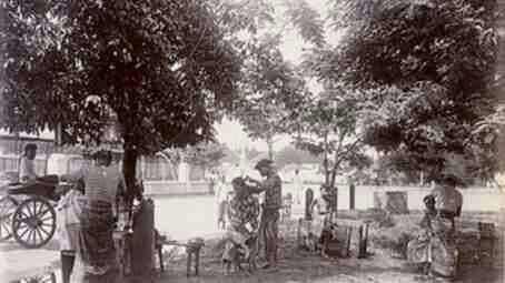 Tukang cukur dpr (di bawah pohon rindang )