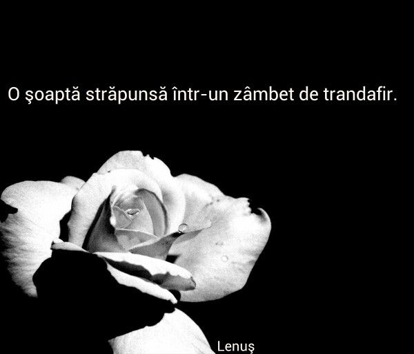 O șoaptă străpunsă într-un zâmbet de trandafir. Lenuș Lungu