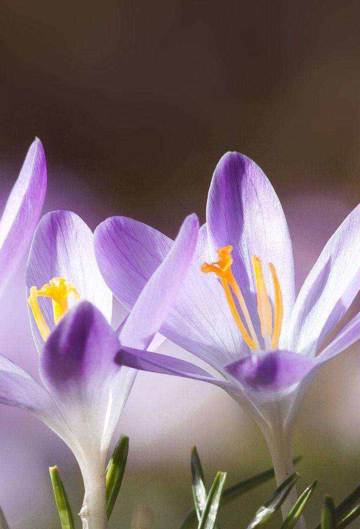 Spring flower image, 35 best flower photos