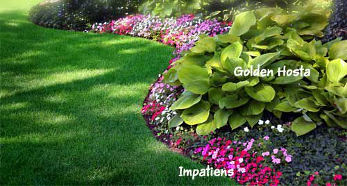 Hostas And Impatiens Have No Doubt That There Are Many