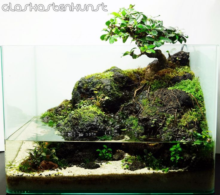 die besten 25 aquarium design ideen auf pinterest aquarium aquascape aquascape aquarium und. Black Bedroom Furniture Sets. Home Design Ideas