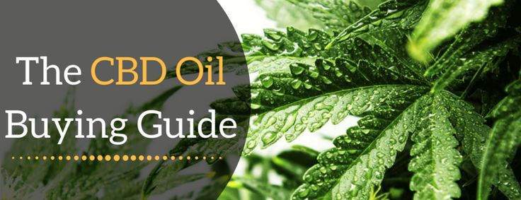 CBD Oil for sale – A buying Guide http://thehempoilbenefits.com/cbd-oil-for-sale  Nice! Real medicine , thats what we are all about as well #leafedin.org