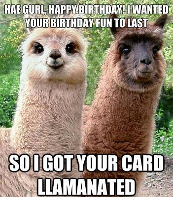 Best 25 Funny Birthday Quotes Ideas On Pinterest Friend