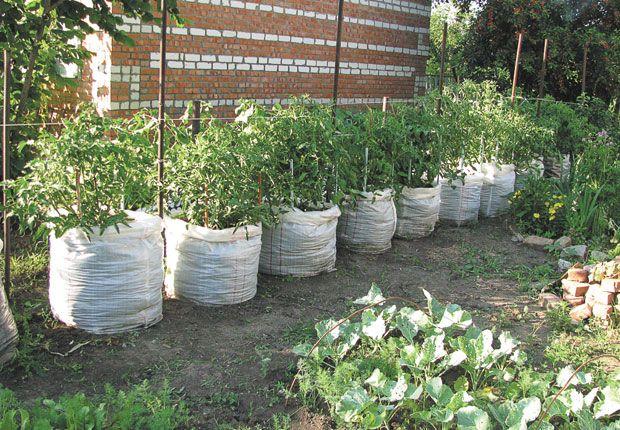 Люблю землю! | Огород | Дача | Аргументы и Факты